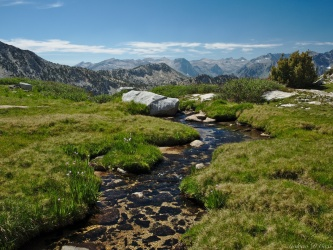 sierra high route creek meadow
