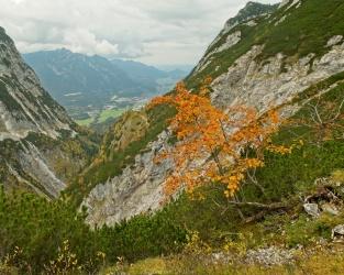 alps autumn