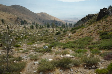 sierra high route baxter pass trailhead