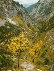 alps autumn foliage