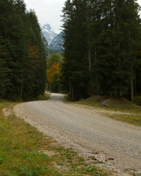 alps forest road