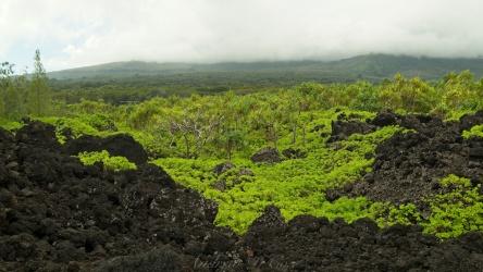 wai'anapanapa state park foliage