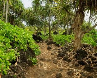 wai'anapanapa state park coastal trail