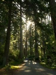 deception pass forest